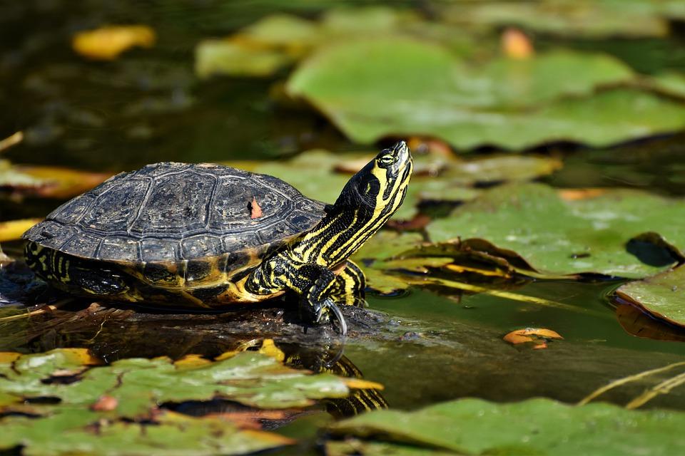 Concevoir votre terrarium à tortues